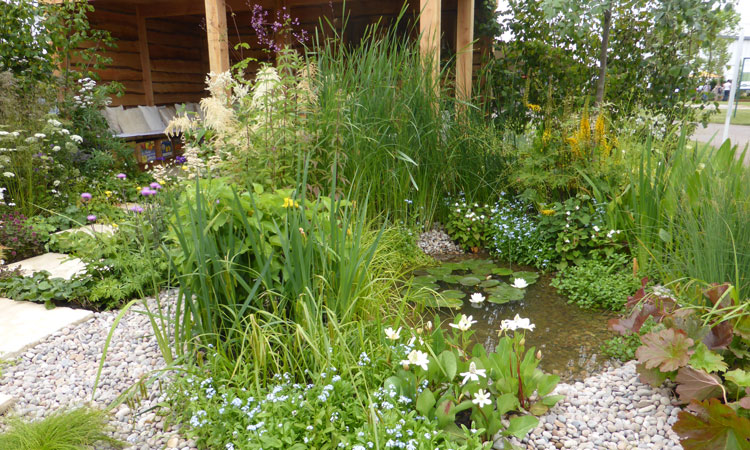 A pond designed and built for wildlife with shallow sides and plant cover around the outside of the water