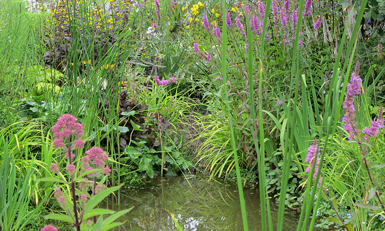A pond for a wildlife habitat with shallow sides and plant cover around the outside of the water