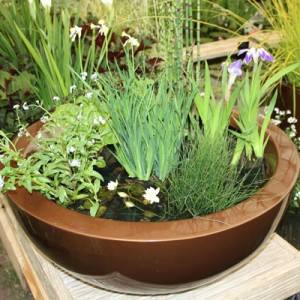 80cm container pond in Dark Copper planted for sun