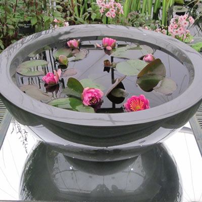 Container pond 60cm wide in Gunmetal planted with dwarf waterlilies