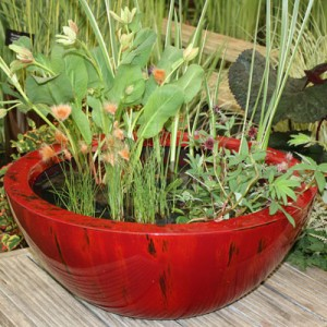 60cm container pond in Weeping Red planted for shade