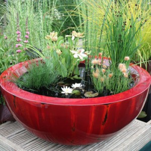 80cm container pond in Weeping Red fibreglass planted for shade