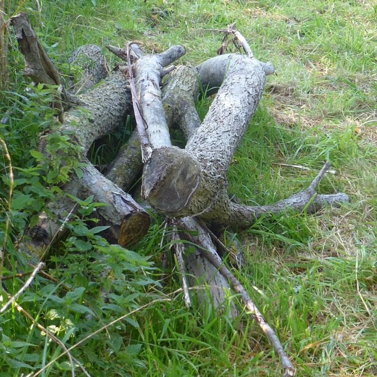 log pile for amphibians