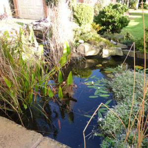 More pond maintenance tips for Autumn