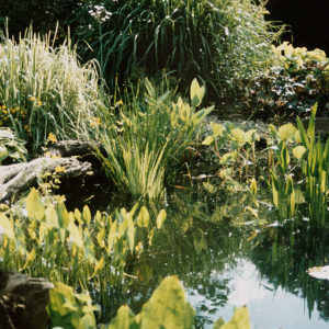 Should you top up your pond?