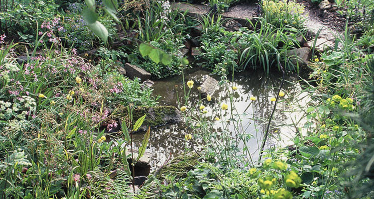 A pond built so the water, rocks and plants link up to create a habitat for pond wildlife