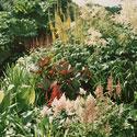 creating-a-bog-garden