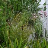 wild-field-pond