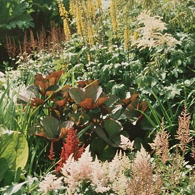 bog plants