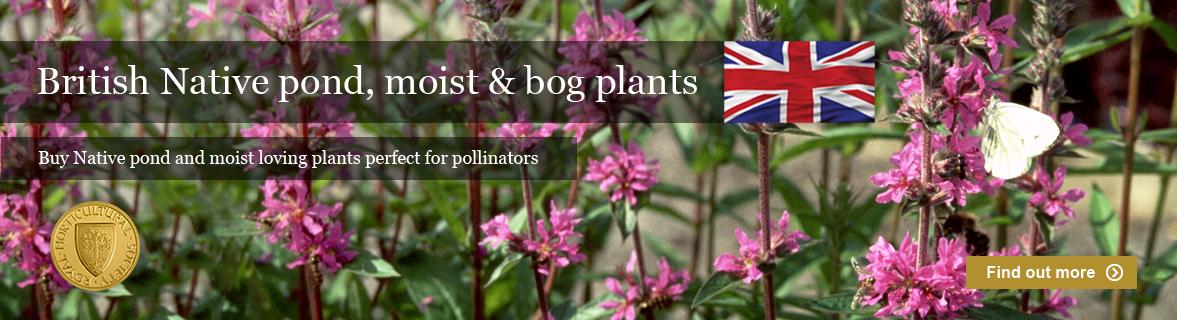 British Native pond plants