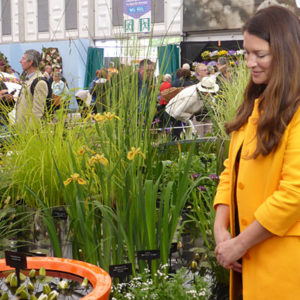 Container ponds featured at Chelsea 2015