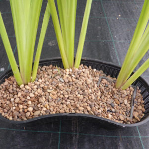 Use a contour and gravel to hold tall plants upright.