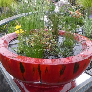 Weeping Red container pond