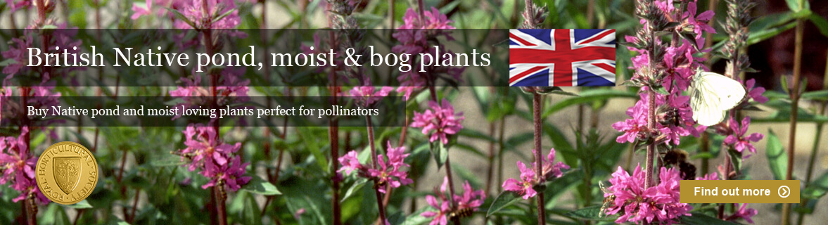British Native plants for ponds, boggy and moist areas around the pond