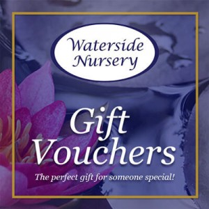 Get Gift Vouchers this Christmas