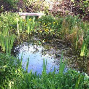 Wild About Gardens Week