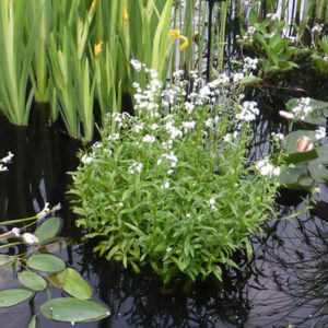 Planting the pond shelves - shelf 0, shelf 1 & shelf 2 depth