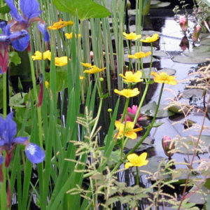 How to plant a pond to create a wildlife habitat