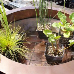 How to position the plants in the container pond