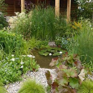 How to choose a site & build a wildlife pond