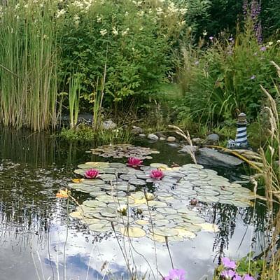 Pond plant care & pond maintenance