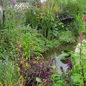 Wildlife pond surrounded by a moist planted area