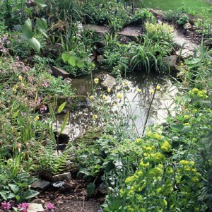 Planning a new wildlife pond