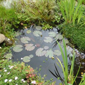 Planting a new pond