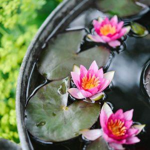 The Garden magazine - Ponds in pots