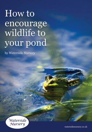 How to encourage wildlife to your pond