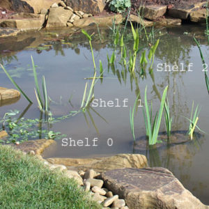 Marginal pond plant shelves
