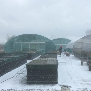 Snow stops us dispatching orders again