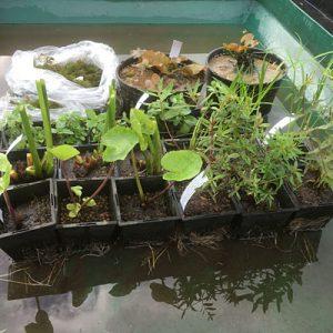 Planting Scheme Size 3