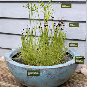 Gardeners World Magazine - Potted ponds