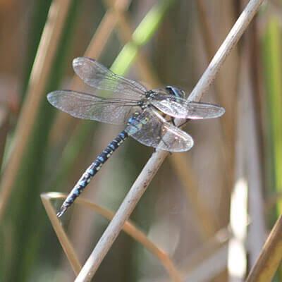 Encourage pond wildlife