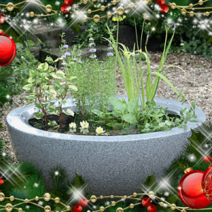 Container ponds as Christmas gifts