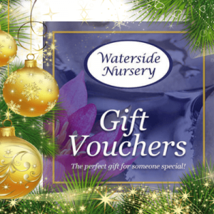 Buy Gift Vouchers this Christmas