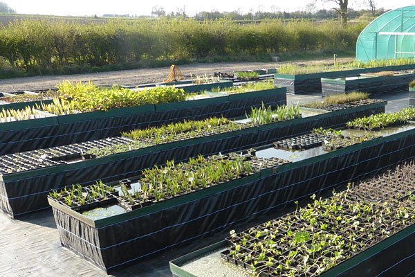 Outdoor tanks of potted pond plants